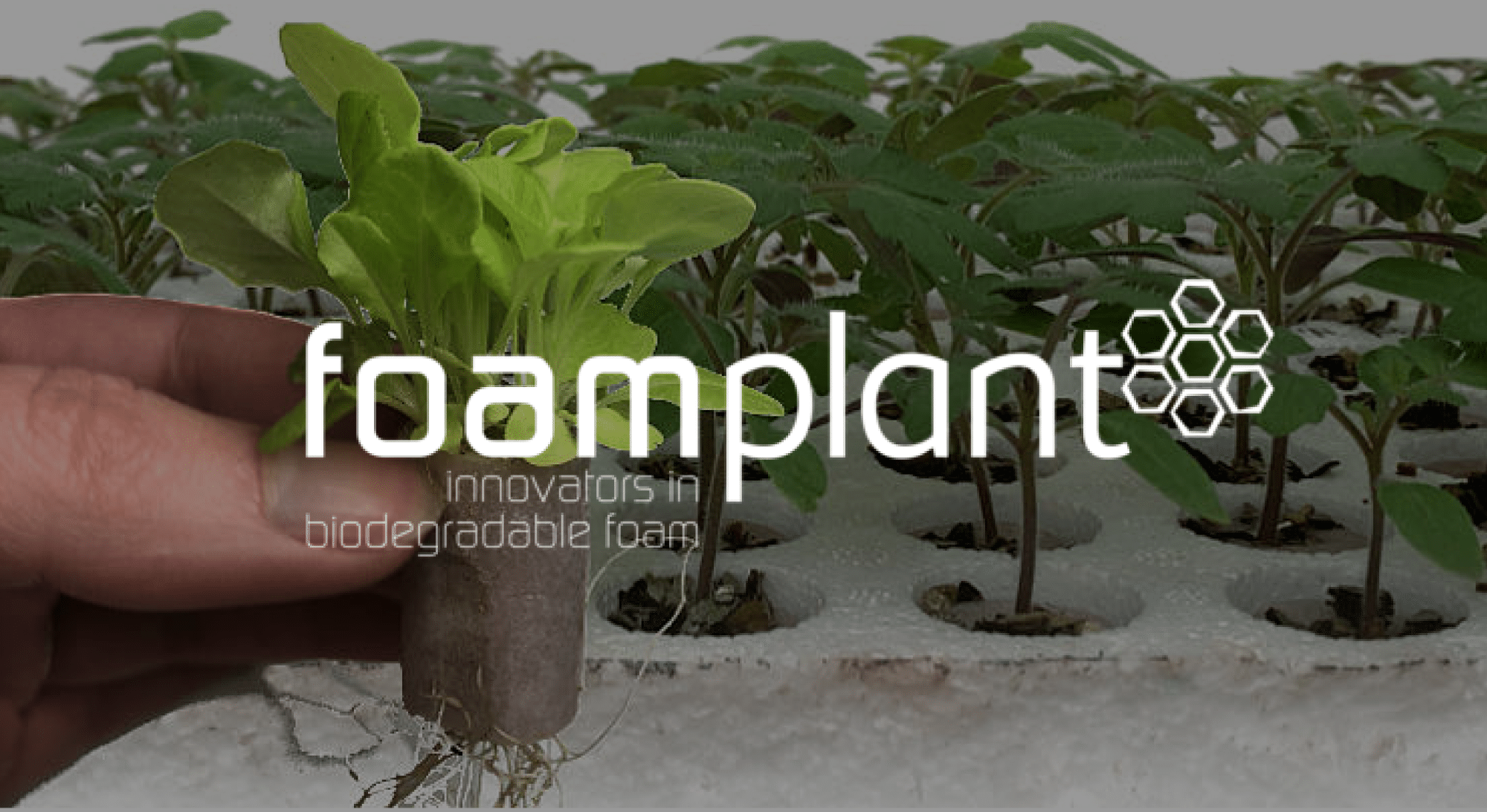Foamplant is an impact scale-up in food and agri that participated in ScaleUpFood, a program for ventures that are aggressively scaling