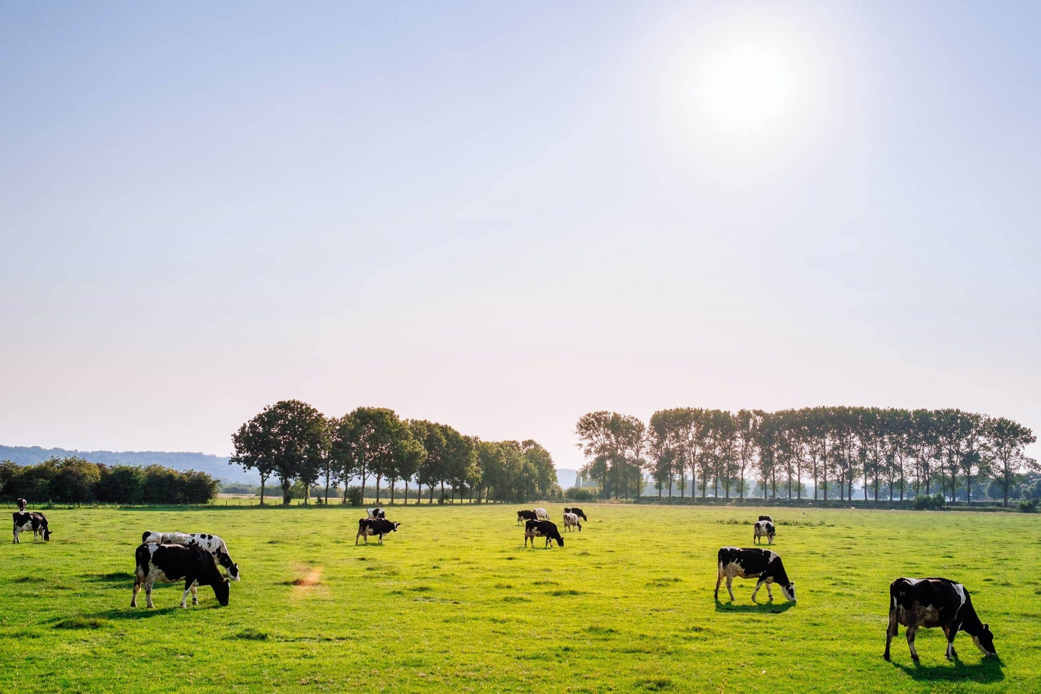 The 2021 Food&Agri ecosystem of the Netherlands